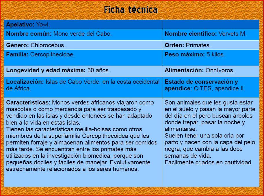 Mono Verde. Enriquecimiento ambiental. Ficha técnica.