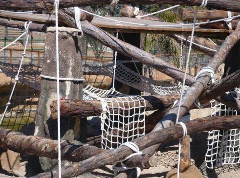 instalaciones de chimpancés