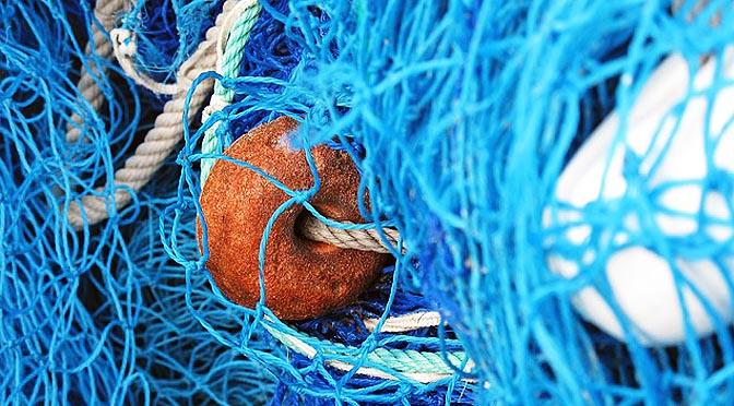 Bienestar animal en la acuicultura