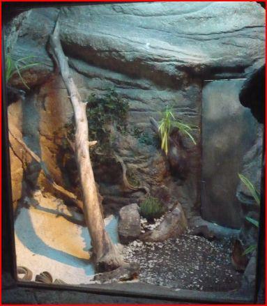 Reptiles. Terrario.