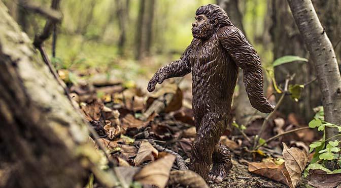 Parecidos entre humanos y grandes simios.