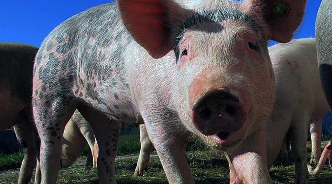 El bienestar animal y las nuevas tecnologías.