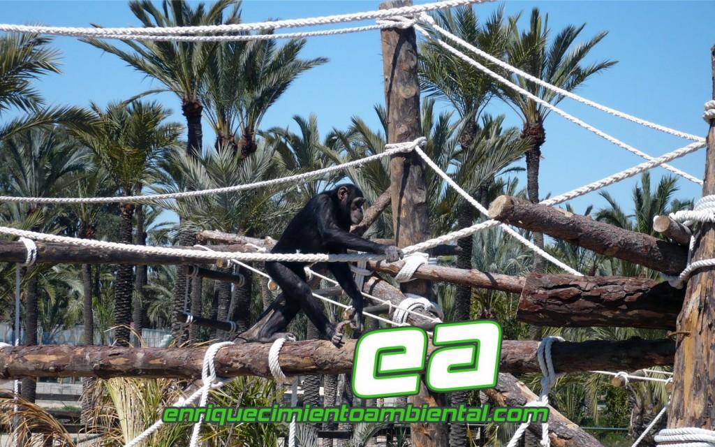 Imagen de enriquecimiento ambiental en el zoo.