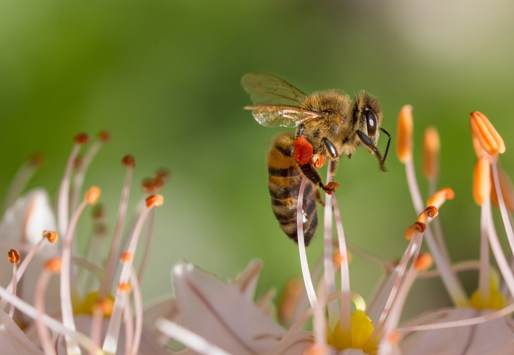 Apicultura. Imagen de manual de apicultura.