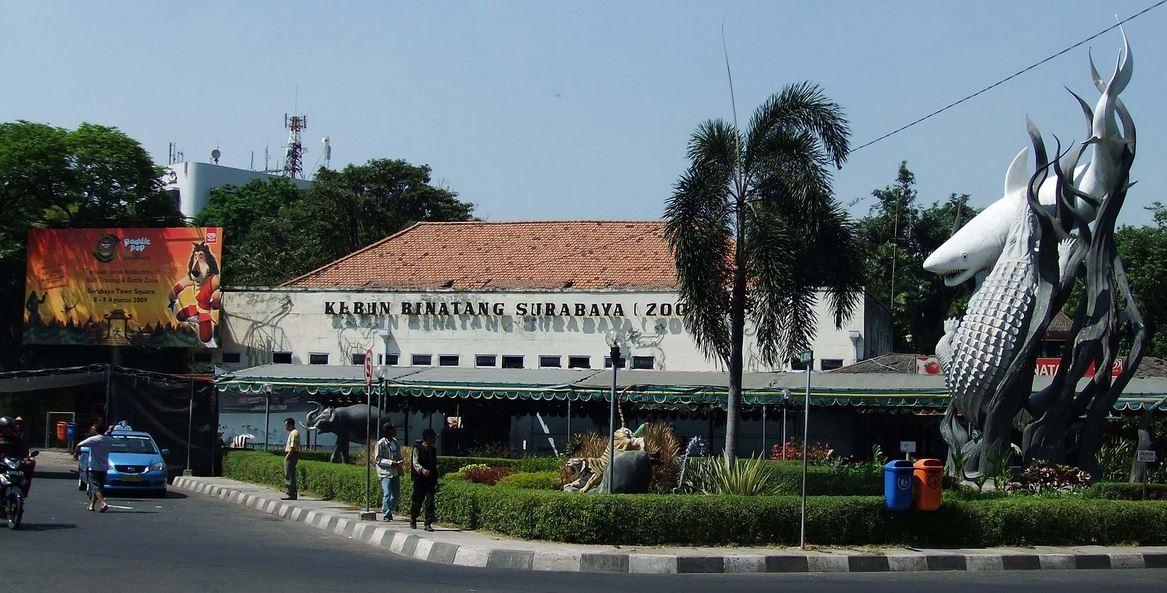 El horror de Surabaya. Los zoos de Indonesia a examen