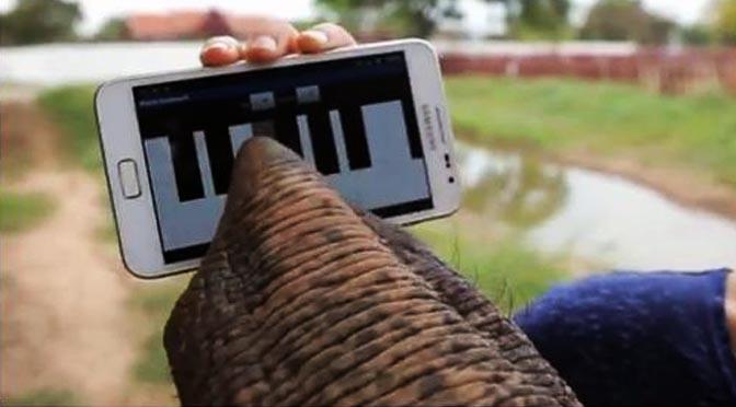 Vídeos de elefante jugando con un móvil.