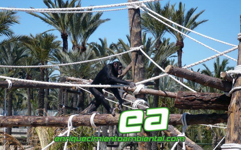 Enriquecimiento ambiental primates.