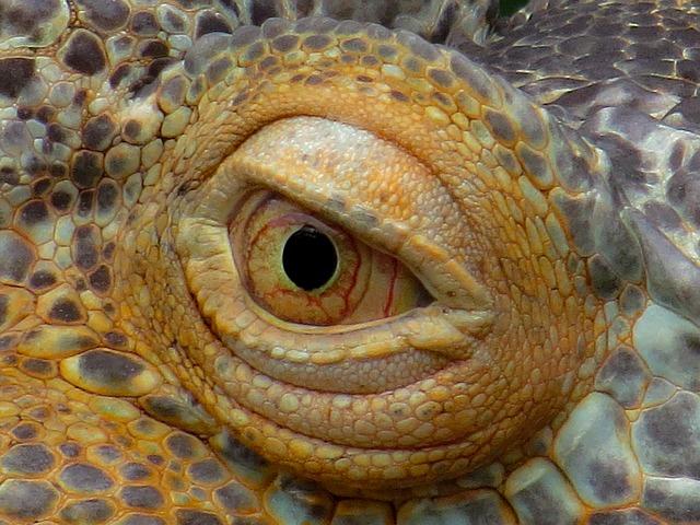 Patologías más comunes de iguanas en terrarios.