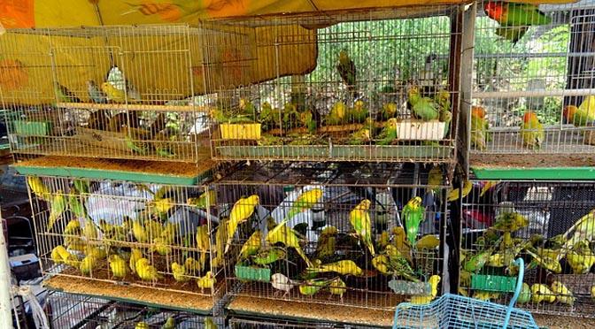 Factores de estrés en tiendas de mascotas para aves y reptiles.