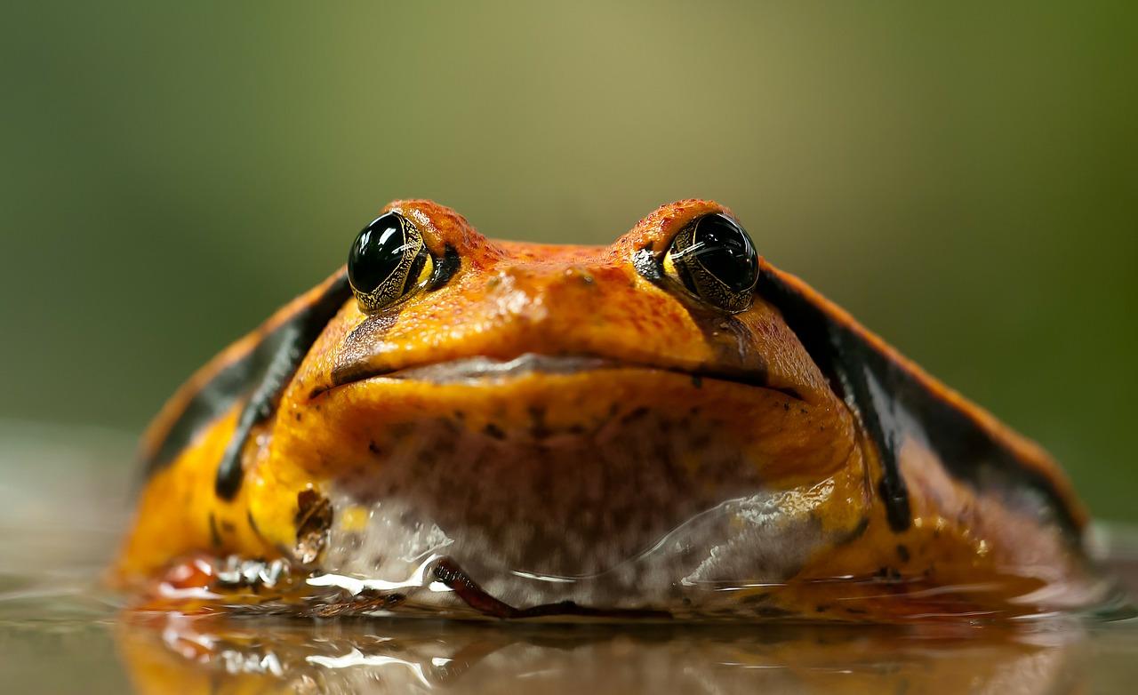 Anfibios Guía de  iniciativas locales