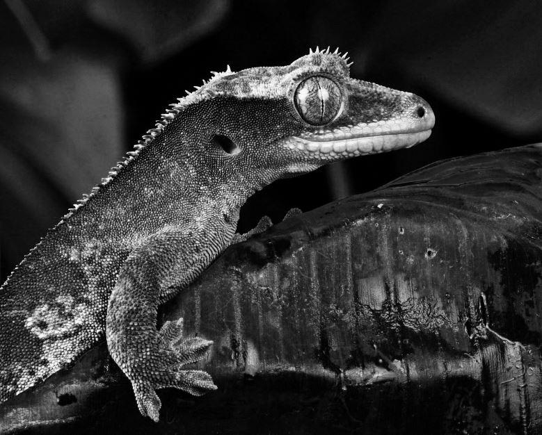 Guía localizar enfermedad y estrés en reptiles.