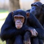 Juegos de enriquecimiento ambiental con primates