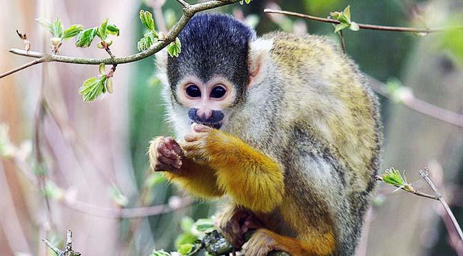 Los primates son prosociales