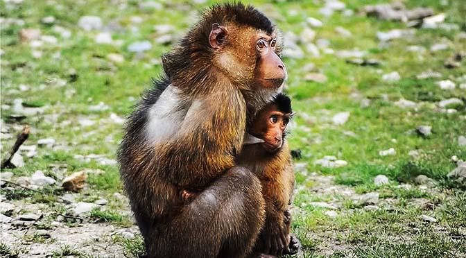 Juegos de enriquecimiento con macacos