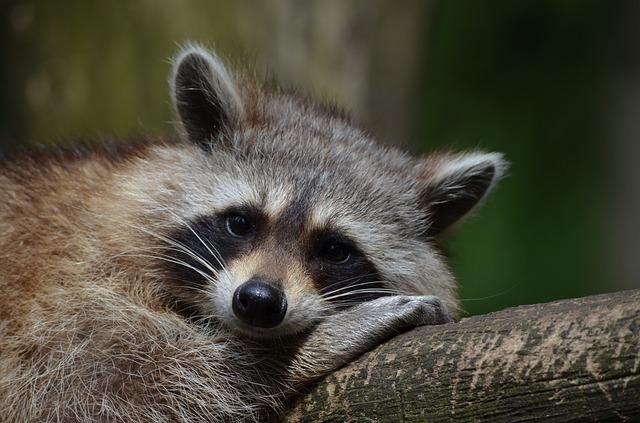 Animales-geriátricos-Guía-de-control-enriquecimiento-ambiental