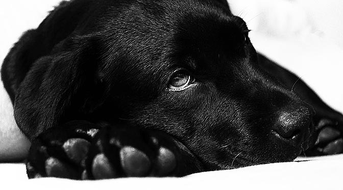 Conductas anormales en animales en cautividad y mascotas