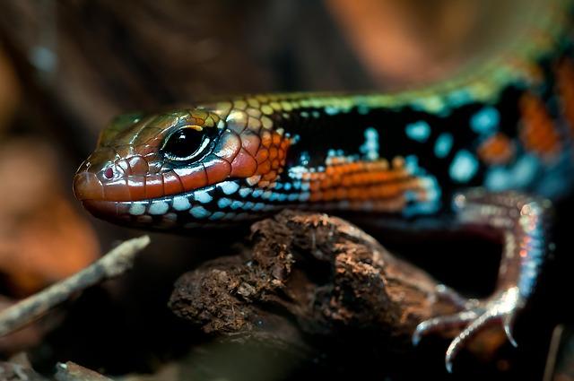 Vídeos de manejo y transporte de reptiles.