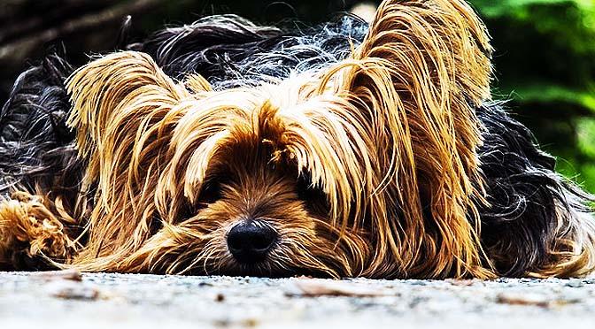 Adiestramiento canino. Resolver malas conductas.