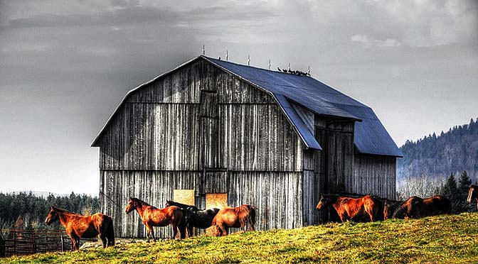 Bienestar en animales de consumo y granja.