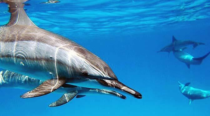 Cómo entender a los delfines.