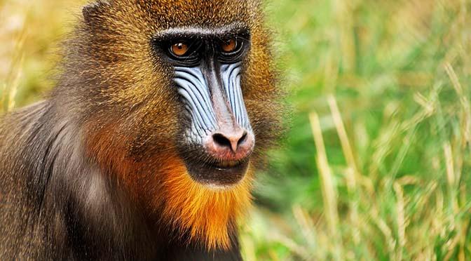 Conservación de primates. Vídeo.