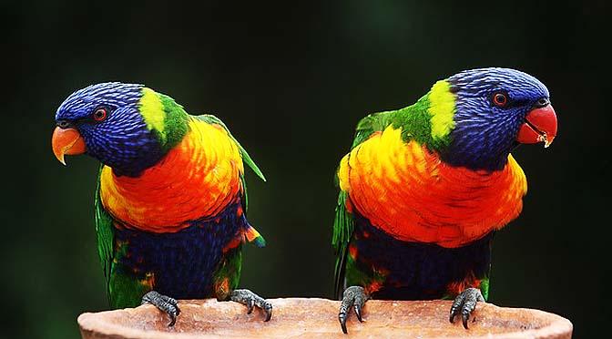 Enriquecimiento con pájaros y picaje