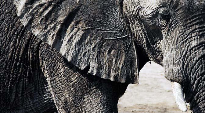 Enriquecimiento con elefantes