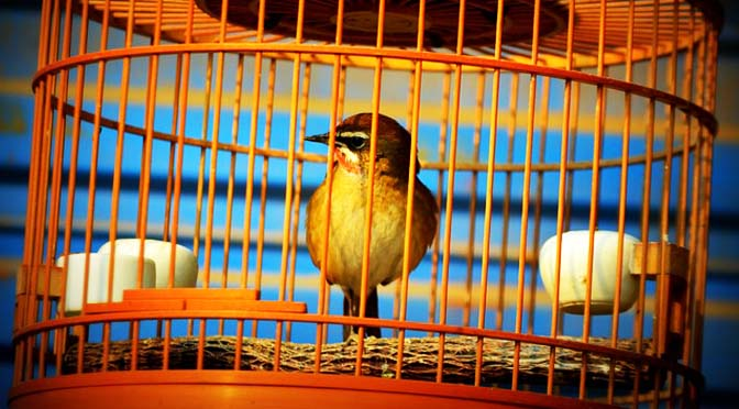Limpieza de jaulas para pájaros.