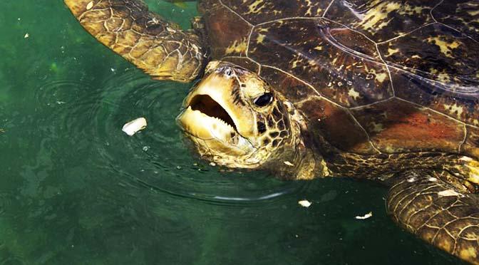 Manejo y cuidados de tortugas.