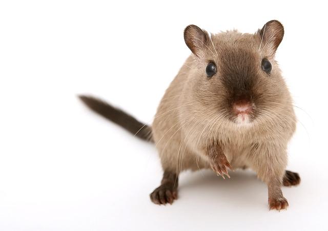 ratón y bienestar.