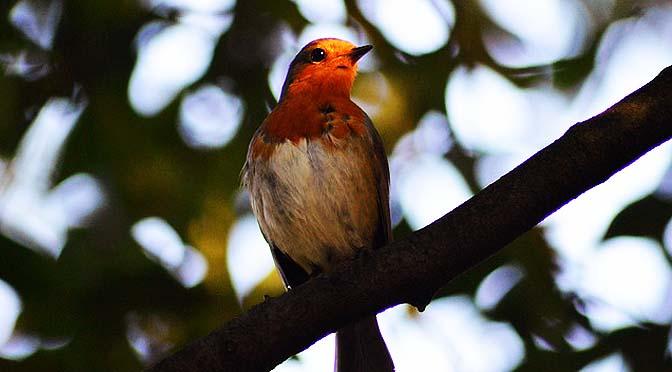 Vídeos de anillamiento de aves.