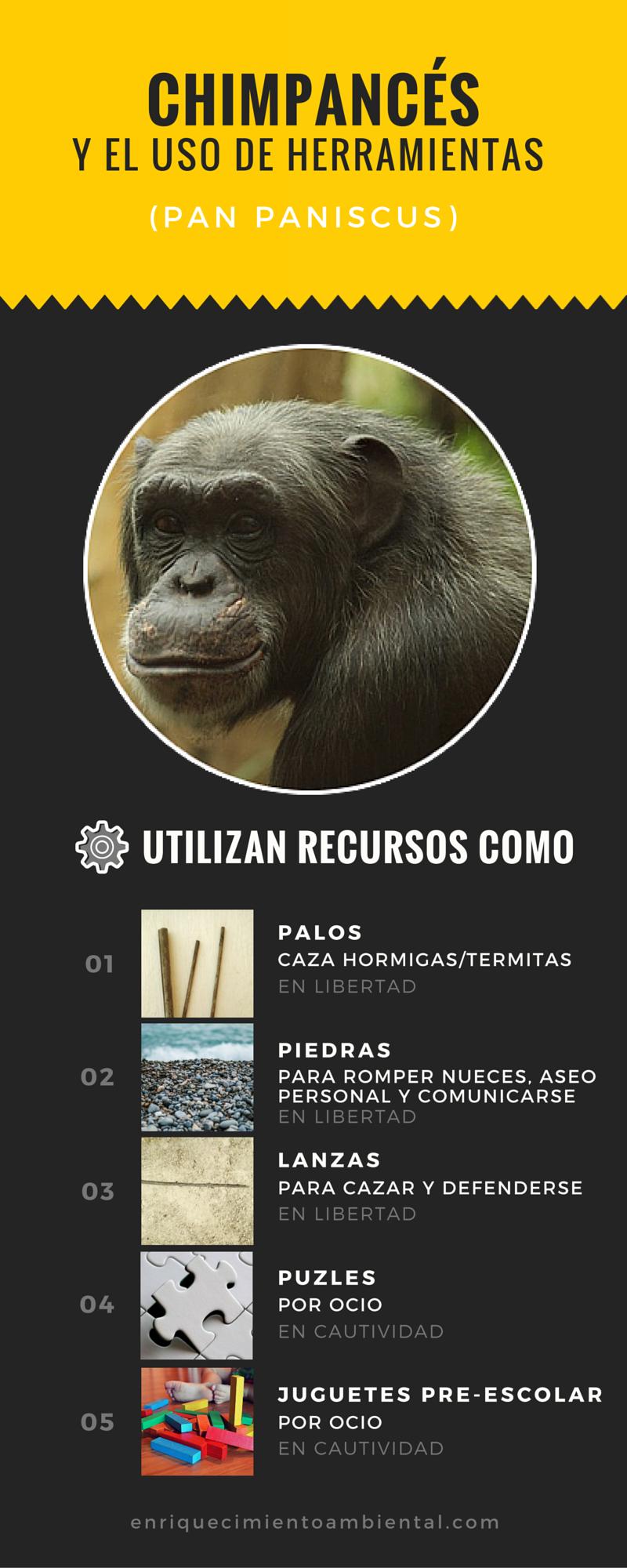 Chimpancés y el uso de herramientas. enriquecimientoambiental.com