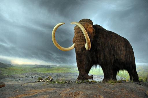 Un parque de animales del Pleistoceno. Clonación animal.