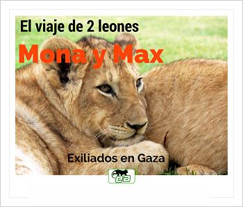 Mona y Max, 2 leones exiliados.