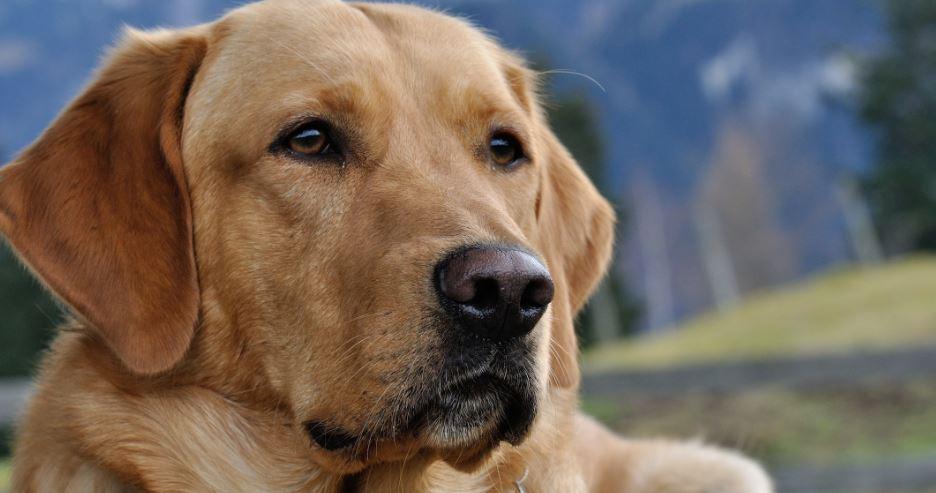 La historia de Nuco el perro guía.