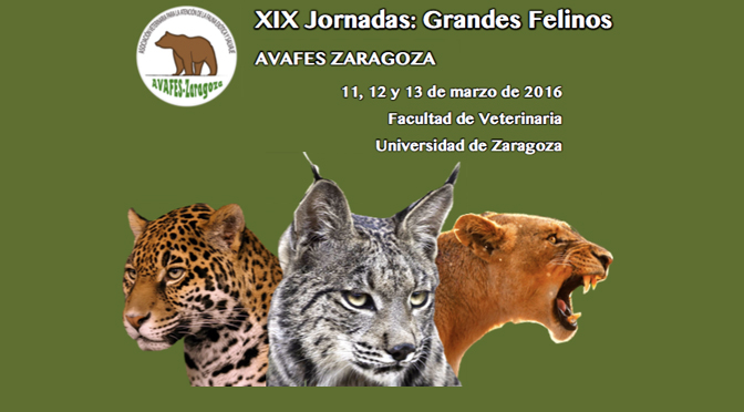 XIX jornadas grandes felinos