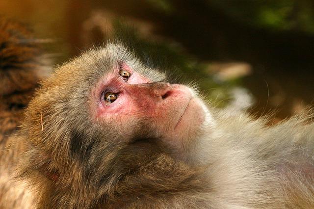Conductas genética y electricidad. La democracia de los babuinos