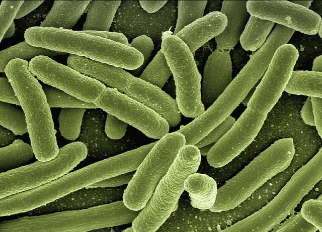 Conductas genética y electricidad. Las bacterias se comunican por electricidad