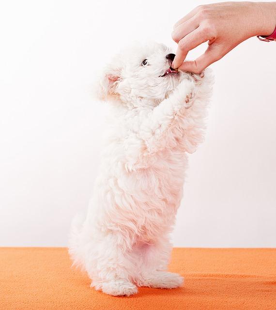 ¿Te preocupas de lo que come tu perro?