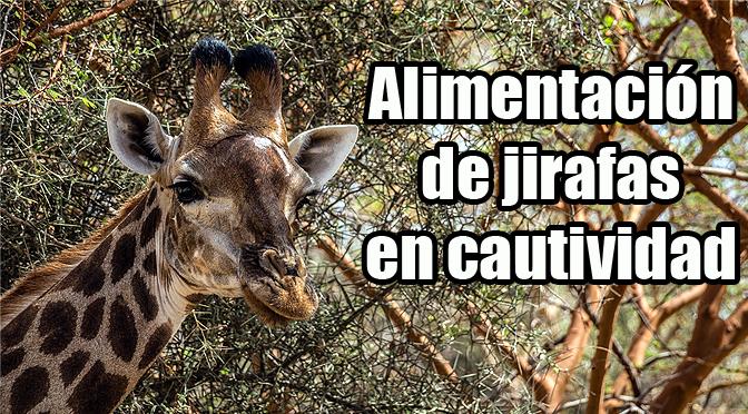 Dietas en jirafas