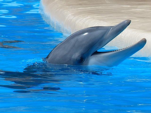 Delfín mular en zoo.