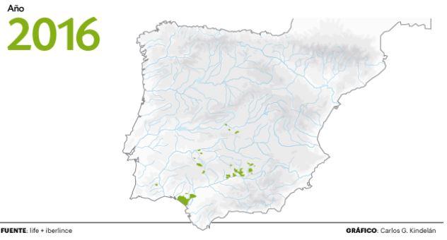 Poblaciones del lince ibérico en la península. Gráfico Carlos G Kindelán