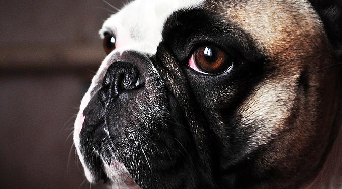 ¿Te Entiende tu Perro Cuando le Hablas?-Enriquecimiento ambiental y bienestar animal
