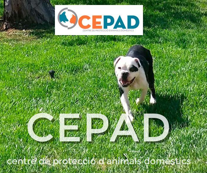 Centro de protección de animales domesticos.