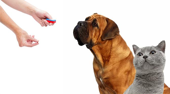 Entrena tu perro o gato mediante Clicker y Target