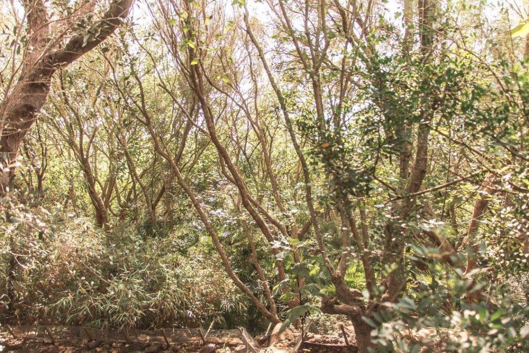 ¿Y esto qué es? ¿la jungla? no, es natura Parc :)