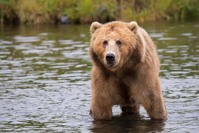 No confundamos a este con el oso de agua. Los tardígrados son algo más pequeños.