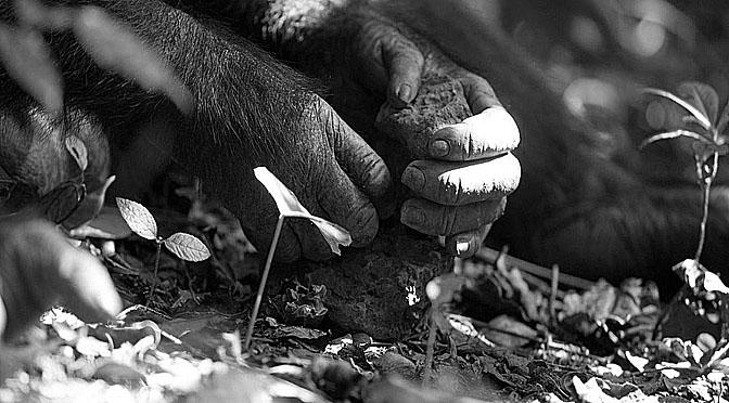 Monos capuchinos usan herramientas de piedra.