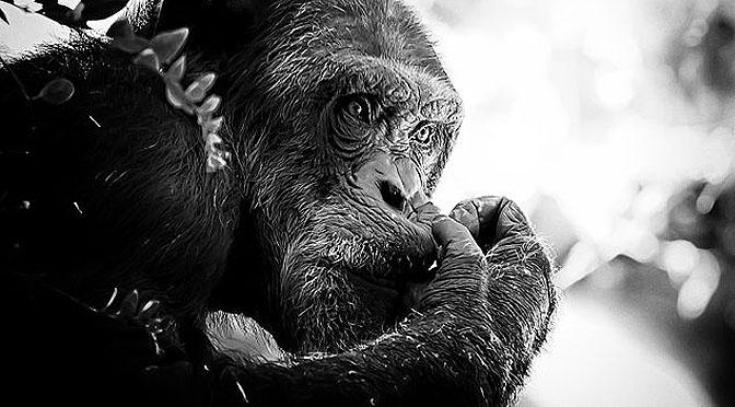Investigación con primates 0 – 1 libertad. Por fin toca jubilarse.