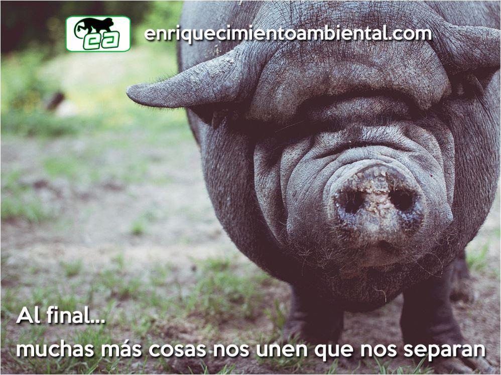 Mucho más nos une que nos separa. enriquecimientoambiental.com